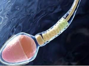 Анализ спермограммы